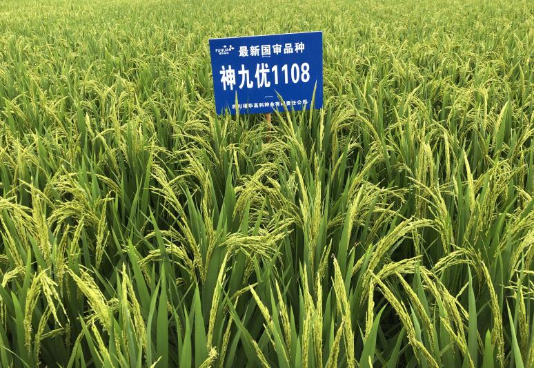 """福华高科水稻新品种""""神九优1108""""通过国家审定"""